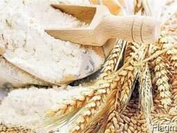Export - Wheat Flour Extra Class from Russia