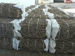Солодковый корень и сухофрукты черешня из РУзбекистан