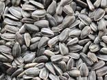 Best offer sunflower seeds - photo 5