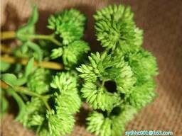 Искусственные цветы - фото 8