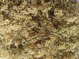 Medicinal herbs - фото 1