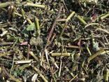 Medicinal herbs - фото 3