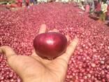 Onions - фото 1