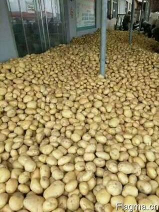 Овощи оптом от 20 т