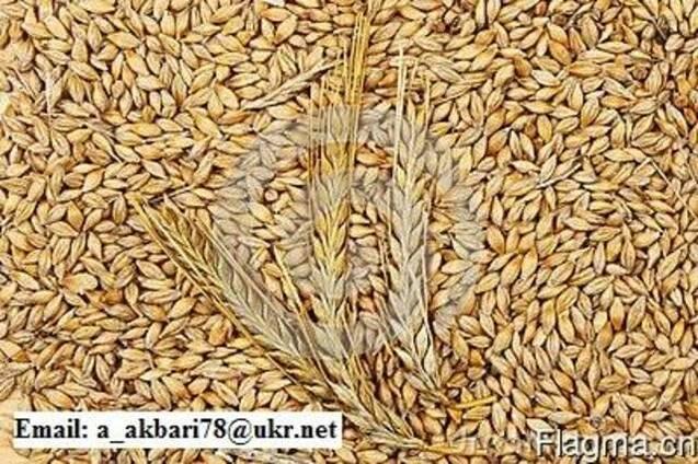 Продам Ячмень и Пшеницу и Кукуруза