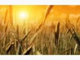 Кукуруза ячмень пшеница экспорт