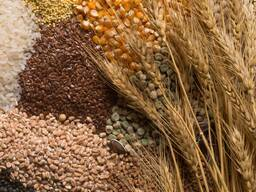 We sell cereal crops, bean cultures, oilseeds