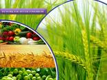 全球农药制造商和供应商 - фото 1